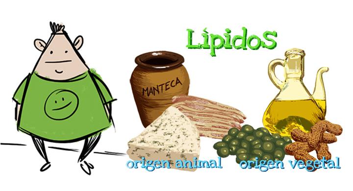 estructura de lipido: