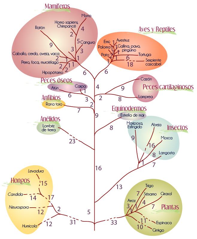 Bioquímica | Portal Académico del CCH