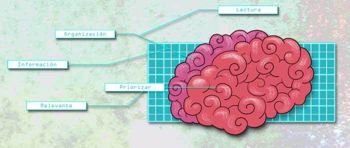 esquema cerebro