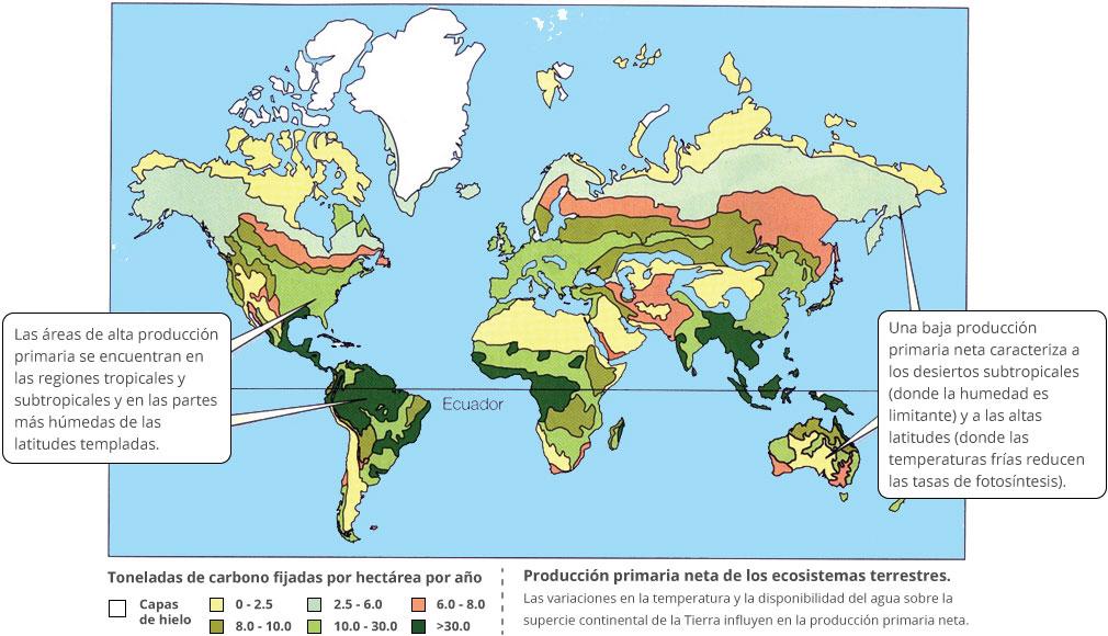 Producción primaria neta de los ecosistemas terrestres.