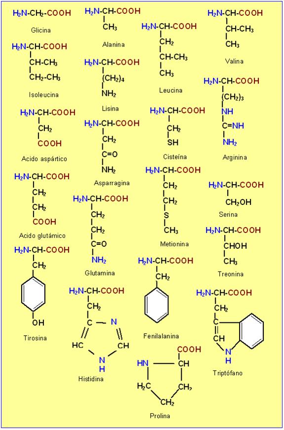 Tabla de Aminoácidos Proteicos