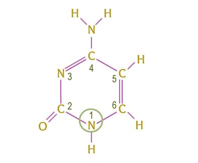 Citosina