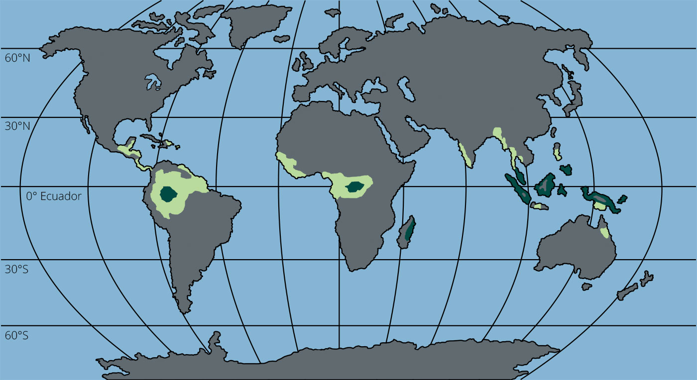 selva-tropical-lluviosa