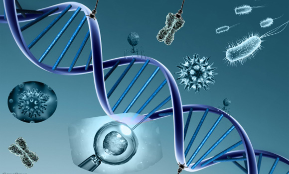 El 25 de abril de 1953, hace exactamente 50 años, la revista científica <em>Nature</em> publicó un texto en el que los científicos estadounidense James Watson y británico Francis Crick presentaban en sociedad su hallazgo de la estructura molecular en forma de doble hélice del ADN, la molécula portadora del programa genético de los organismos vivos. El descubrimiento de los planos por los que se rige la molécula de la vida propició avances de los que se han derivado el diagnóstico y la terapia genéticos o la creación de animales y plantas transgénicos. Claro que el desarrollo de estas disciplinas también ha originado problemas como la patente de los genes humanos o la selección genética de las personas (ELPAIS.ES, 2003).