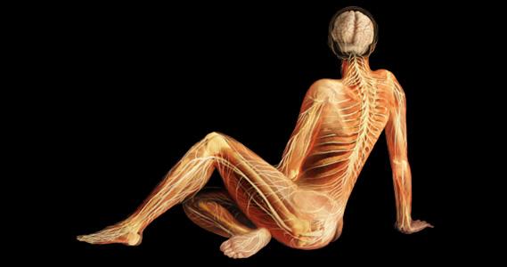 Elementos químicos en el cuerpo humano
