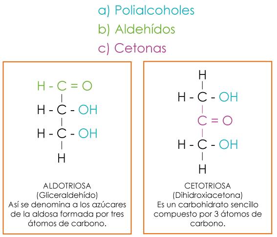 componentes de carbohidratos