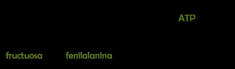 fructuosa, fenilalanina, ATP